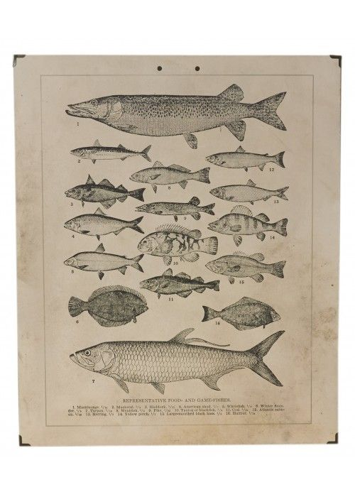 Eb & Vloed Wandkaart Vissen 50x60